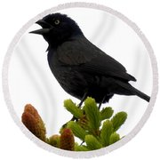 Brewer's Blackbird Round Beach Towel