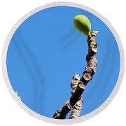 Bright Fig Against The Sky. Round Beach Towel