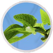 Bright Green Fig Leaf Against The Sky Round Beach Towel