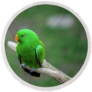 Bright Green Parrot Round Beach Towel