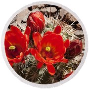 Bright Orange Cactus Blossoms Round Beach Towel