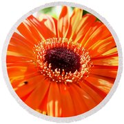 Bright Orange Gerbera  Round Beach Towel