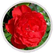 Bright Red Rose At Pilgrim Place In Claremont-california  Round Beach Towel