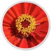 Bright Zinnia Round Beach Towel