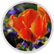 Brilliant Bright Orange And Red Flowering Tulips In A Garden Round Beach Towel
