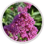 Brilliant Pink Blooming Phlox Flowers In A Garden Round Beach Towel