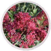 Brilliant Red Blooming Phlox Flowers In A Garden Round Beach Towel