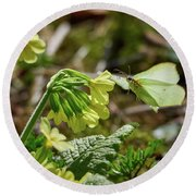 Brimstone On Cowslip Primrose Round Beach Towel