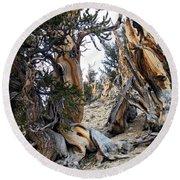 Bristlecone Forest, Ca November 2105 Round Beach Towel