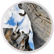 Bristlecone Great Basin Portrait Round Beach Towel