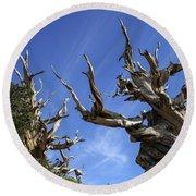 Bristlecone Trees Round Beach Towel