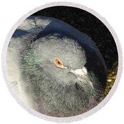 British Pigeon Round Beach Towel