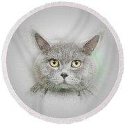 British Shorthair Cat Round Beach Towel