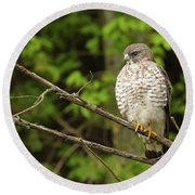 Broad Winged Hawk On The Lookout Round Beach Towel