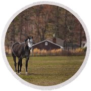 Brown And White Horse Round Beach Towel