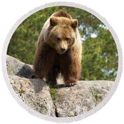 Brown Bear 3  Round Beach Towel