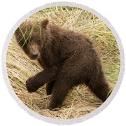 Brown Bear Cub Turns To Look Back Round Beach Towel