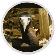 Brown Booby Round Beach Towel