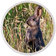 Brown Bunny Round Beach Towel
