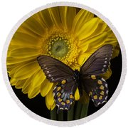 Brown Butterfly On Yellow Daisies  Round Beach Towel
