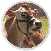 Brown Cow Chewing Round Beach Towel