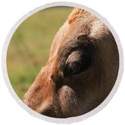 Brown Cow With Vignette Round Beach Towel