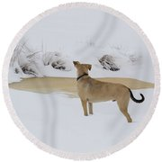 Brown Dog In The Snow Round Beach Towel