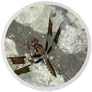 Brown Dragonfly  Round Beach Towel