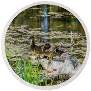 Brown Ducks On Log Round Beach Towel