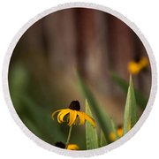 Brown Eed Susans By Red Bard Round Beach Towel