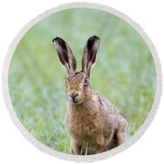 Brown Hare Round Beach Towel