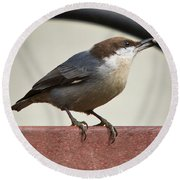 Brown-headed Nuthatch Round Beach Towel