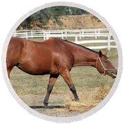 Brown Horse Eating Hay Ranch Scene Round Beach Towel
