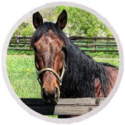 Brown Horse In A Corral Round Beach Towel