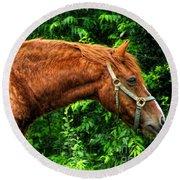 Brown Horse In High Definition Round Beach Towel