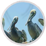 Brown Pelican 4 Round Beach Towel