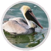 Brown Pelican In The Bay Round Beach Towel