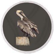 Brown Pelican - Preening - Transparent Round Beach Towel