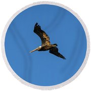 Brown Pelican Soars Above Round Beach Towel