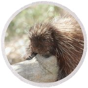 Brown Porcupine On A Fallen Log Round Beach Towel