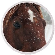 Brown Snow Horse Round Beach Towel
