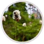 Brown Spruce Longhorn Beetle Round Beach Towel