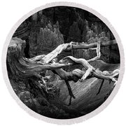 Bryce Canyon Tree Stump On A Ridge Round Beach Towel