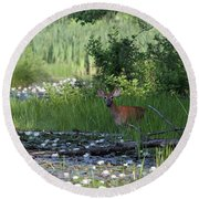 Buck In Pond Round Beach Towel