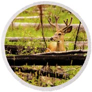 Buck In Velvet Round Beach Towel