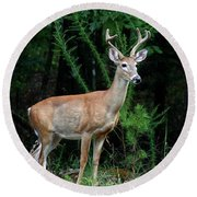 Buck Round Beach Towel