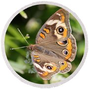 Buckeye Butterfly Square Round Beach Towel