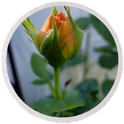 Bud Of A Rose Round Beach Towel