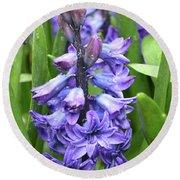 Budding And Flowering Purple Hyacinth Flower Round Beach Towel