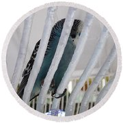Budgerigar Round Beach Towel